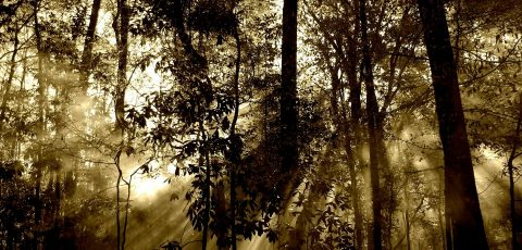 foret lumiere